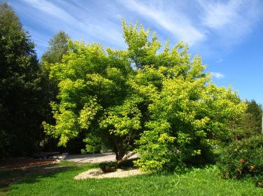 Эко-путешествие в Ботанический Сад